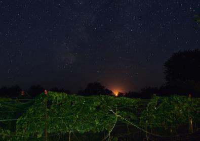 Nightfall over Blackmon Ranch Vineyard