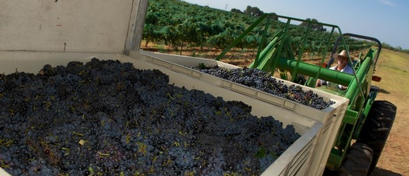 Photo courtesy of Robert Clay Vineyards - a 100% Texas-grown winery.